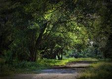 Caminando en el bosque, el natural Fotos de archivo libres de regalías