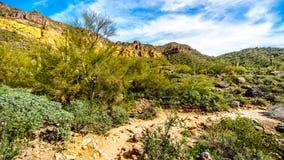 Caminando en el rastro de la cueva del viento de la montaña colorida de Usery rodeada por los cantos rodados grandes, el Saguaro  imagen de archivo libre de regalías