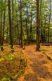 Caminando, trayectoria que camina en el bosque hermoso del otoño, inspirando, medit imagenes de archivo