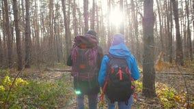 Caminando y haciendo excursionismo concepto Los jóvenes se juntan de los viajeros que caminan en bosque en día del otoño almacen de video