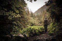 Caminante con caminar polos en un bosque de la montaña fotografía de archivo libre de regalías