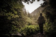 Caminante con caminar polos en un bosque de la montaña fotografía de archivo