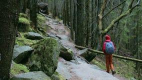 Caminante de la mujer con la mochila, llevando en chaqueta roja y los pantalones anaranjados, caminando en el bosque en monta?as metrajes