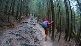 Caminante de la mujer con la mochila, llevando en chaqueta roja y los pantalones anaranjados, caminando en el bosque en monta?as almacen de video