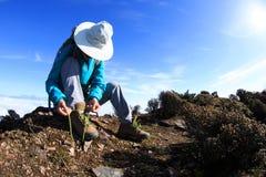 Caminante de la mujer que ata el cordón en pico de montaña hermoso Foto de archivo