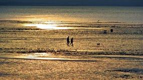 Caminante del perro de la puesta del sol durante la bajamar Fotografía de archivo