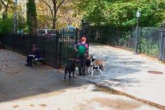 Caminante del perro en New York City Imagen de archivo libre de regalías