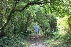 Caminante en el sendero enmarcado por los árboles el día de verano Fotos de archivo libres de regalías