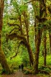 Caminante en la trayectoria de la selva tropical imagenes de archivo
