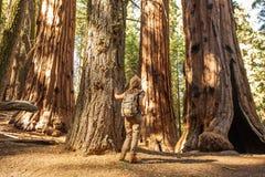 Caminante en parque nacional de secoya en California, los E.E.U.U. imagen de archivo