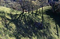 Caminante en rastro montañoso Fotos de archivo libres de regalías