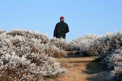 Caminante en un paisaje hivernal Imágenes de archivo libres de regalías