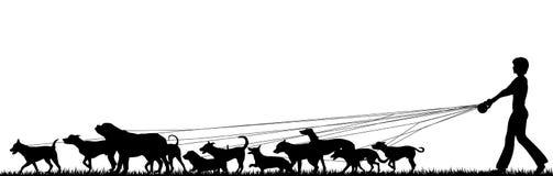 Caminante femenino del perro Imagen de archivo