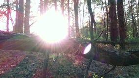 Caminante femenino joven en bosque metrajes