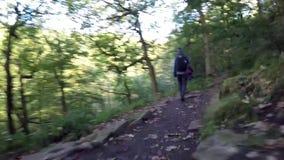 Caminante femenino que camina a través de bosque almacen de metraje de vídeo