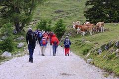 Caminante nórdicos en la montaña de Dobrac, Austria Foto de archivo libre de regalías