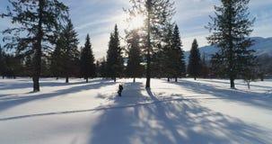 Caminante que camina en un paisaje nevoso 4k almacen de metraje de vídeo