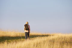 Caminante que camina a través de prado Imagen de archivo