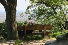 Caminante que descansa sobre un banco de madera Imagen de archivo
