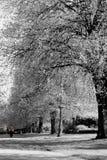 Caminante solitario Imagenes de archivo