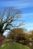 Caminante y árbol por el canal de Lancaster en Galgate Imagen de archivo libre de regalías