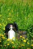 Caminar botas en un prado del verano Imagenes de archivo