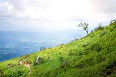 Caminar el top de la manera del moutain en el bosque de la mañana Imagenes de archivo