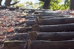 Caminar la trayectoria en bosque Foto de archivo libre de regalías