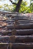 Caminar la trayectoria en bosque Imagen de archivo libre de regalías