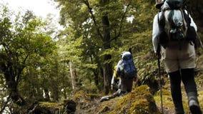 Caminar Nueva Zelanda metrajes