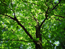 Caminata 2 del bosque Fotos de archivo libres de regalías