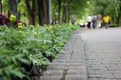 Caminata Imagenes de archivo
