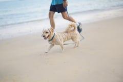 Caminata con un perro Imagen de archivo