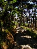 Caminata de Bush Imagen de archivo libre de regalías