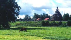 Caminata de la mañana Imagen de archivo libre de regalías