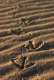Caminata de la ondulación Foto de archivo libre de regalías