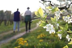 Caminata de la primavera fotografía de archivo