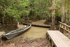 Caminata de la selva Imagenes de archivo