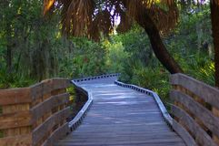 Caminata de madera a través del parque Foto de archivo libre de regalías