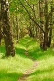 Caminata del arbolado Foto de archivo libre de regalías