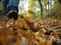 Caminata del hombre en parque Imágenes de archivo libres de regalías