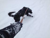 Caminata del invierno con el perro Foto de archivo libre de regalías