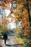 Caminata del otoño Fotos de archivo