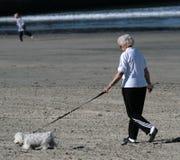 Caminata del perro Fotografía de archivo libre de regalías