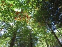 Caminata en el bosque Foto de archivo