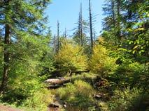Caminata en el bosque Fotografía de archivo