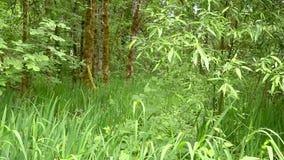 Caminata en el bosque almacen de metraje de vídeo