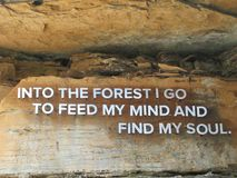 Caminata en el bosque imagen de archivo