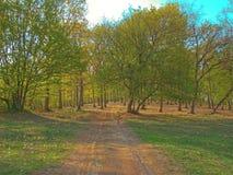 Caminata en el bosque Imágenes de archivo libres de regalías