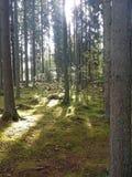 Caminata en el bosque Imagenes de archivo